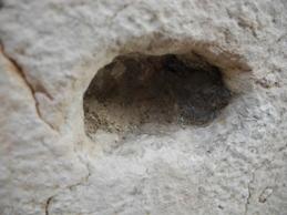 Stomatite aftosa e omeopatia