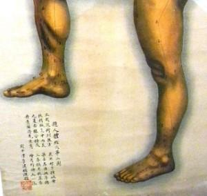 Omeopatia iniettabile roma tendine di Achille