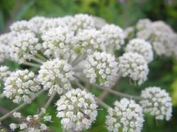 Omeopatia iniettabile e allergie