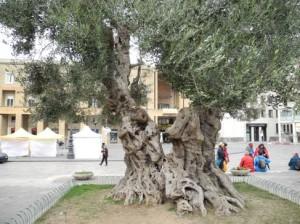 Olive Fiori di Bach e omeopatia